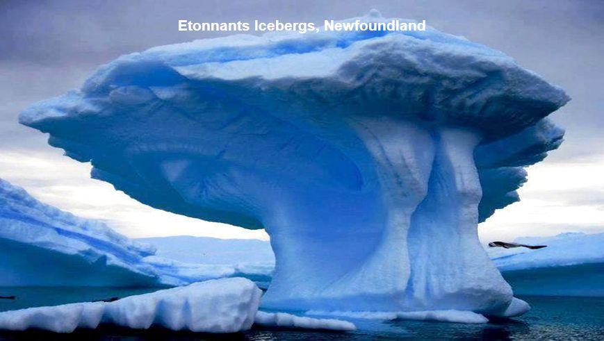 Etonnants Icebergs, Newfoundland