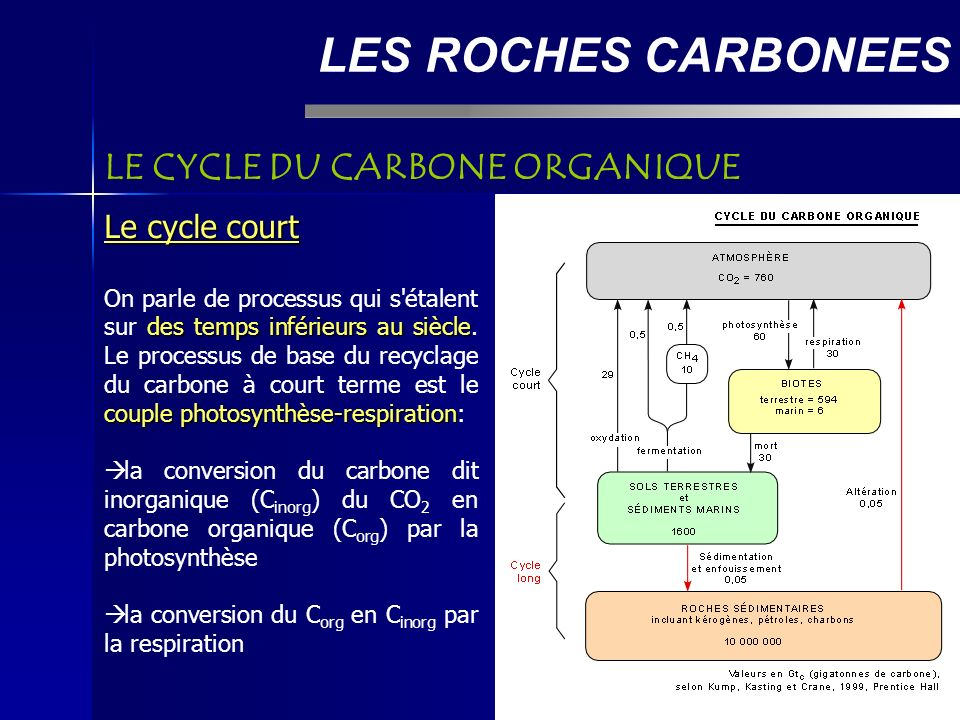 LES ROCHES CARBONEES LE CYCLE DU CARBONE ORGANIQUE Le cycle court