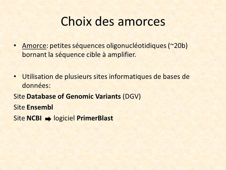 Choix des amorces Amorce: petites séquences oligonucléotidiques (~20b) bornant la séquence cible à amplifier.
