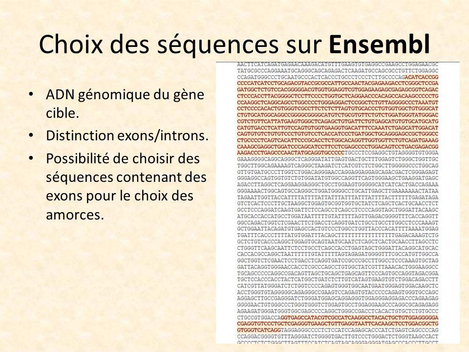 Choix des séquences sur Ensembl