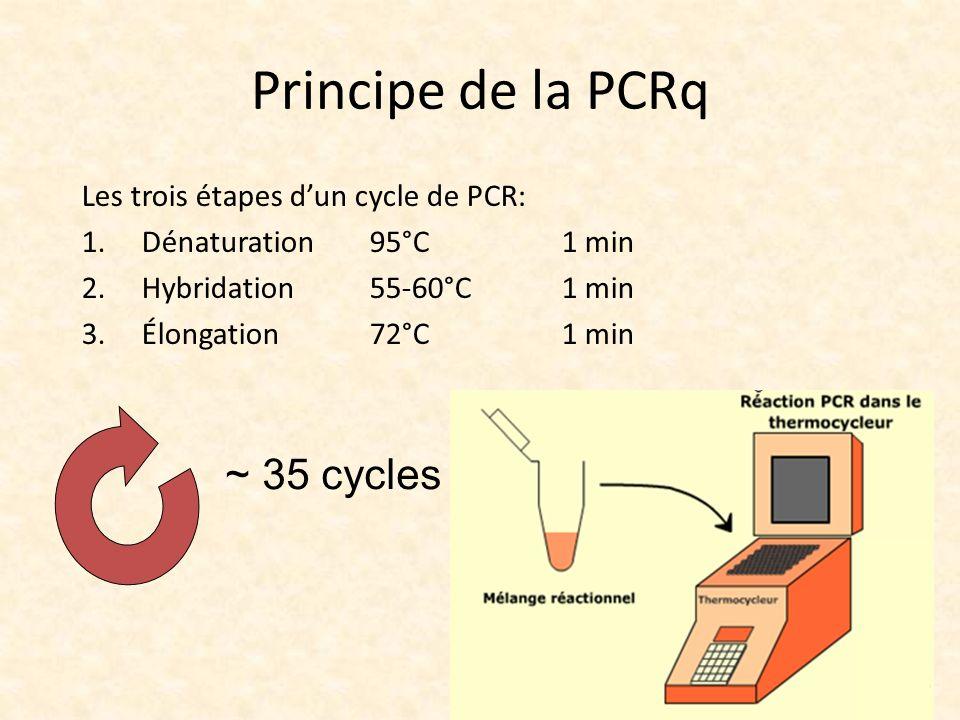 Principe de la PCRq ~ 35 cycles Les trois étapes d'un cycle de PCR: