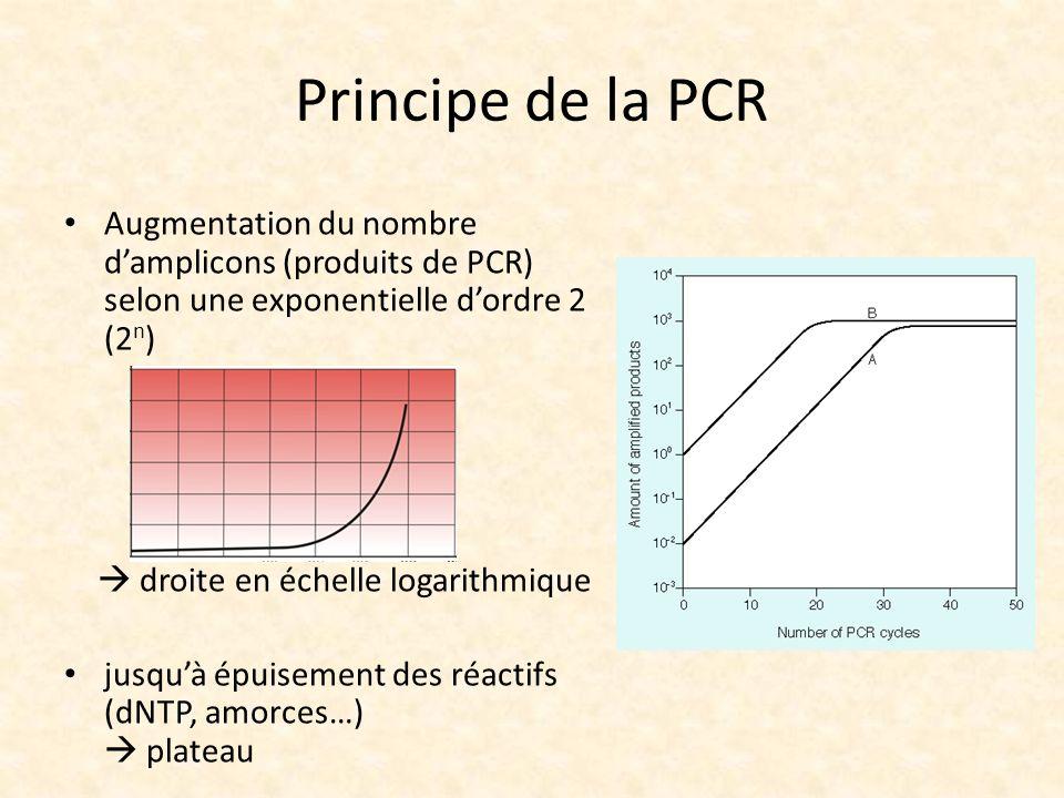 Principe de la PCR Augmentation du nombre d'amplicons (produits de PCR) selon une exponentielle d'ordre 2 (2n)