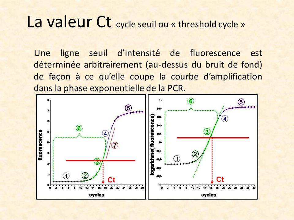 La valeur Ct cycle seuil ou « threshold cycle »