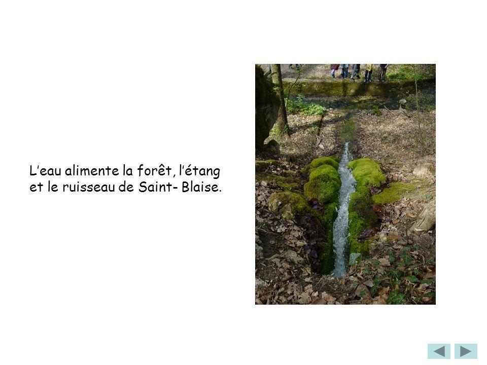 L'eau alimente la forêt, l'étang et le ruisseau de Saint- Blaise.