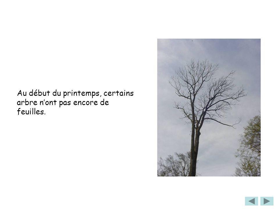 Au début du printemps, certains arbre n'ont pas encore de feuilles.