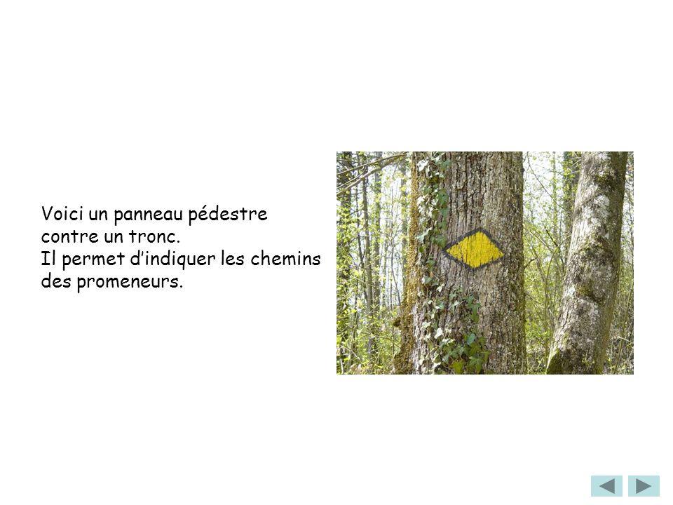 Voici un panneau pédestre contre un tronc