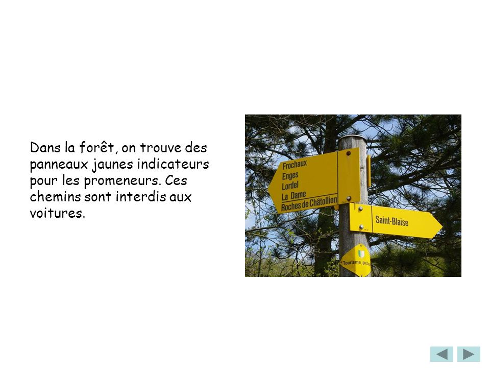 Dans la forêt, on trouve des panneaux jaunes indicateurs pour les promeneurs.