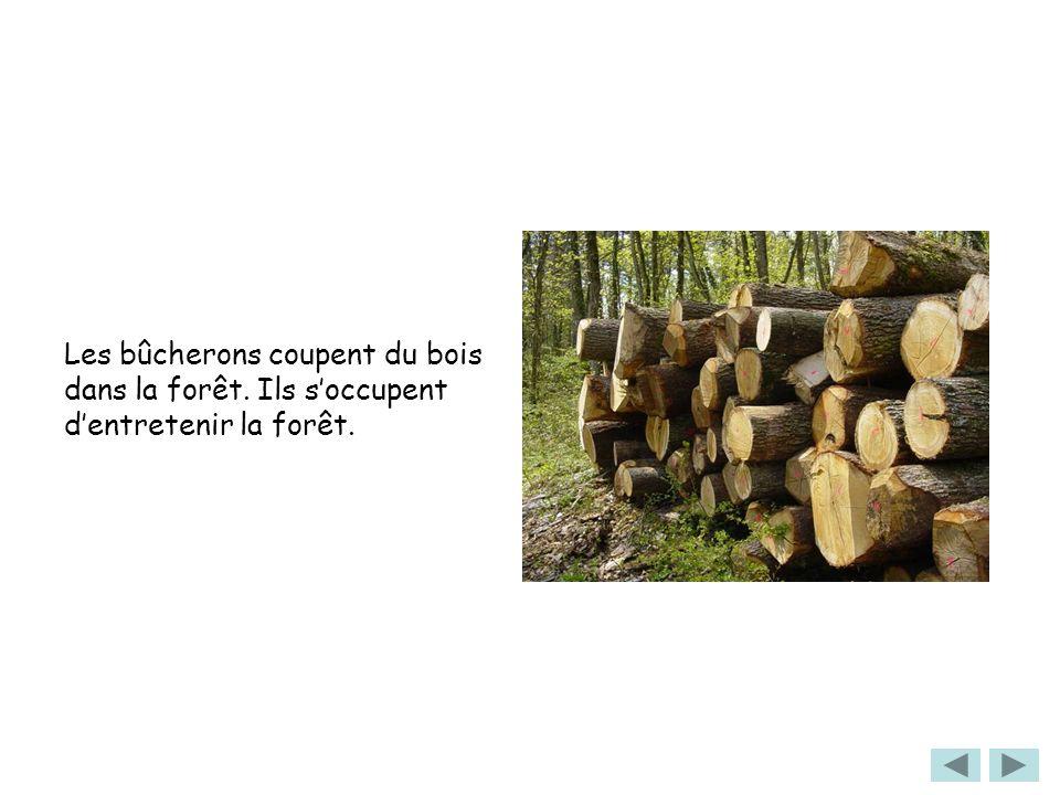 Les bûcherons coupent du bois dans la forêt