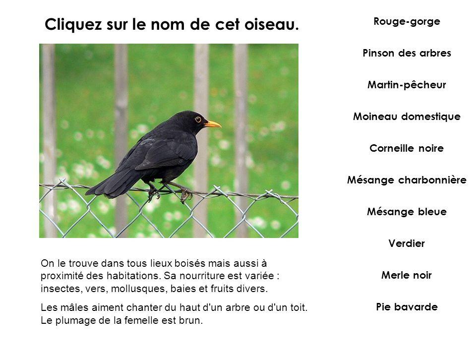 Cliquez sur le nom de cet oiseau.