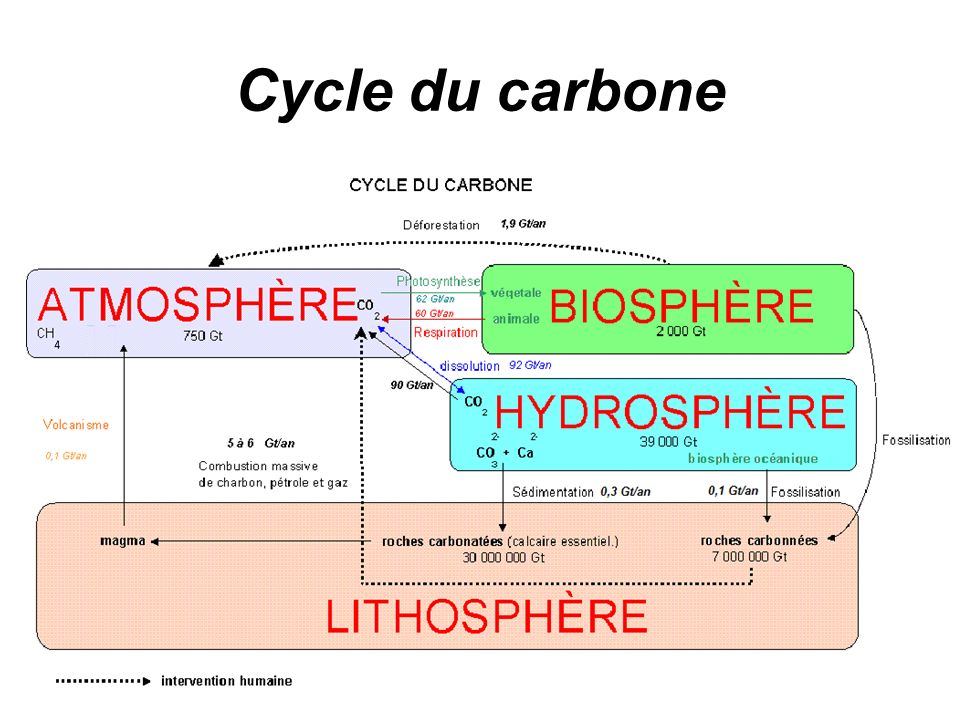 Cycle du carbone