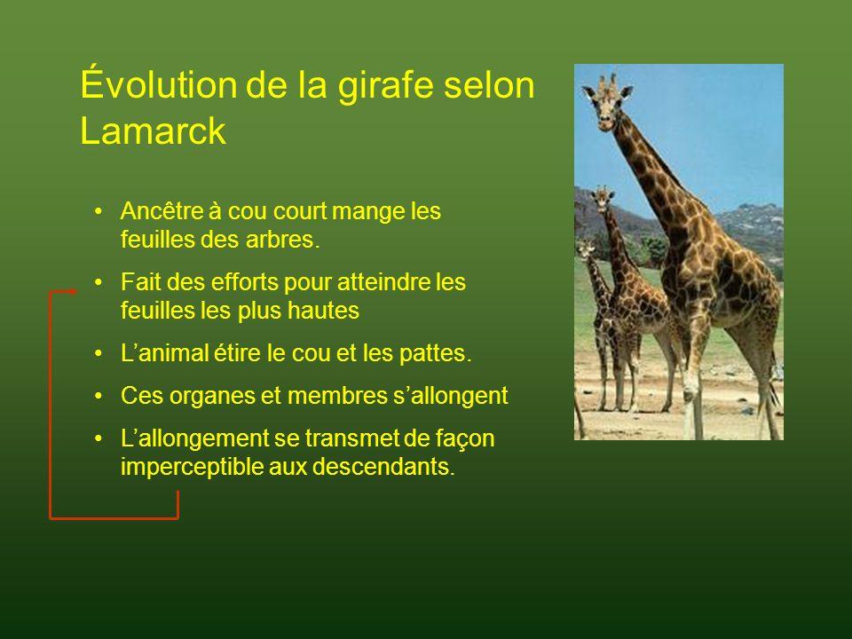 Évolution de la girafe selon Lamarck