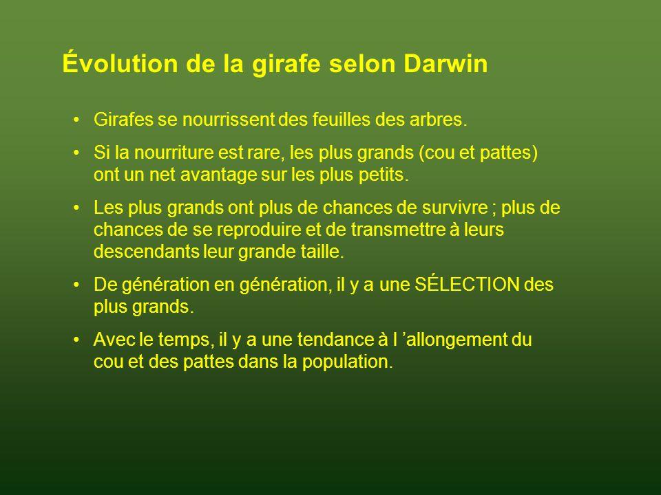 Évolution de la girafe selon Darwin