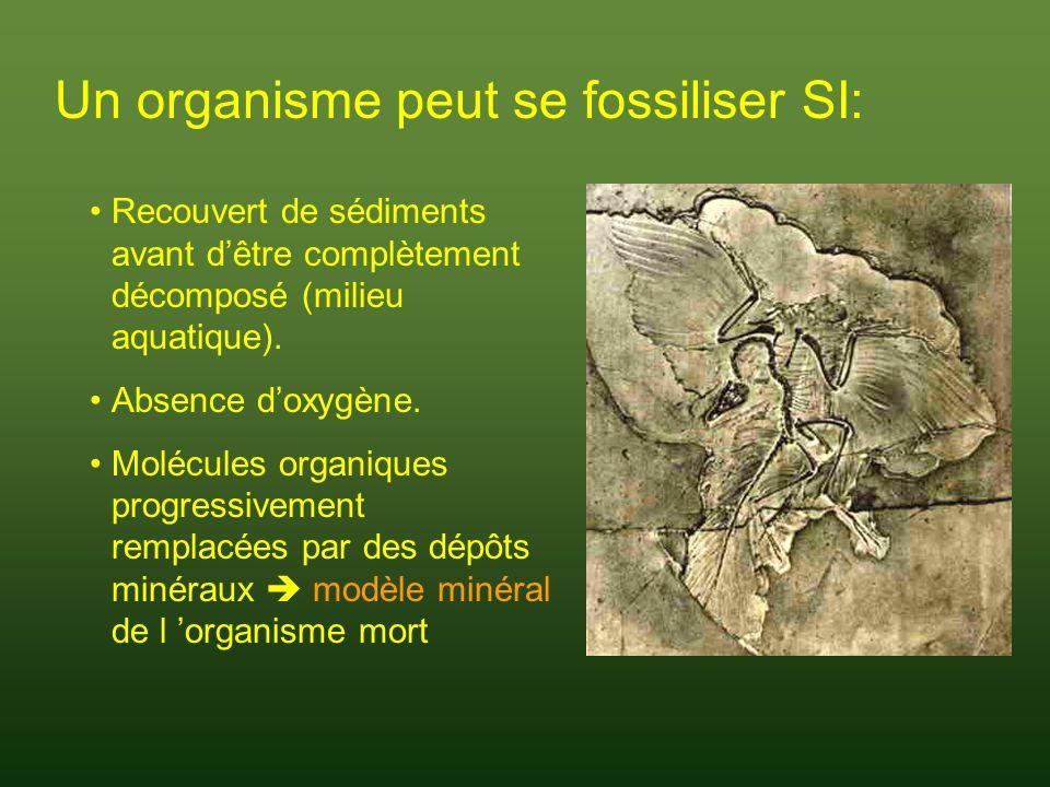 Un organisme peut se fossiliser SI: