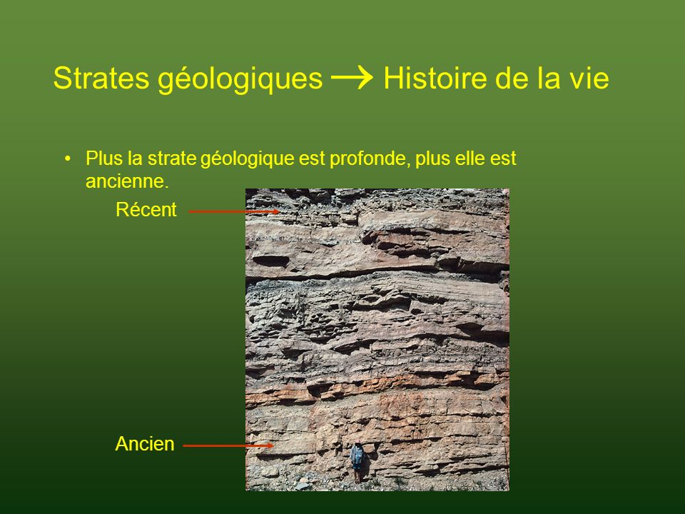Strates géologiques  Histoire de la vie