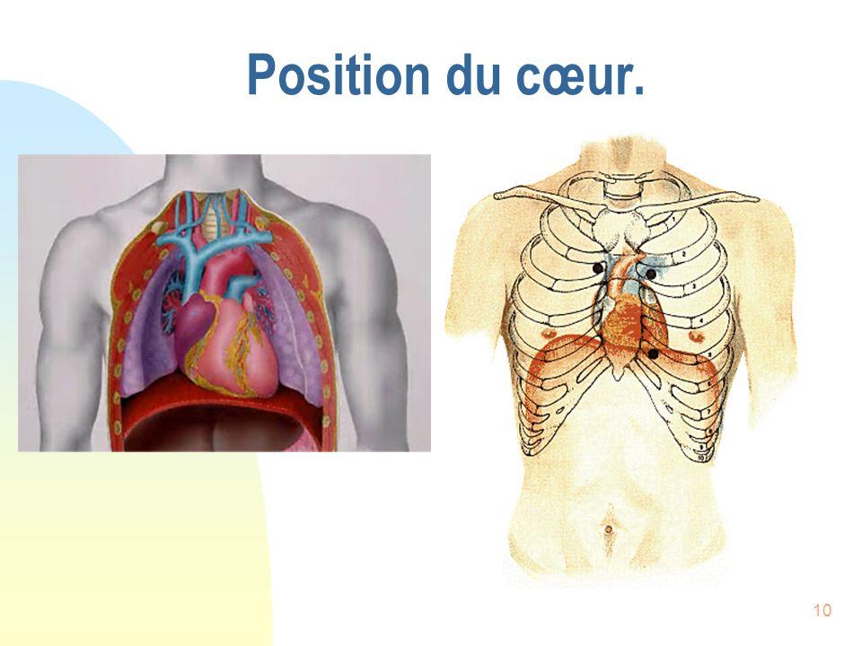 Position du cœur.