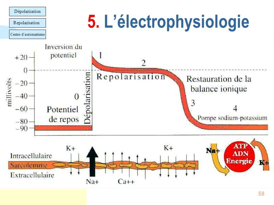 5. L'électrophysiologie