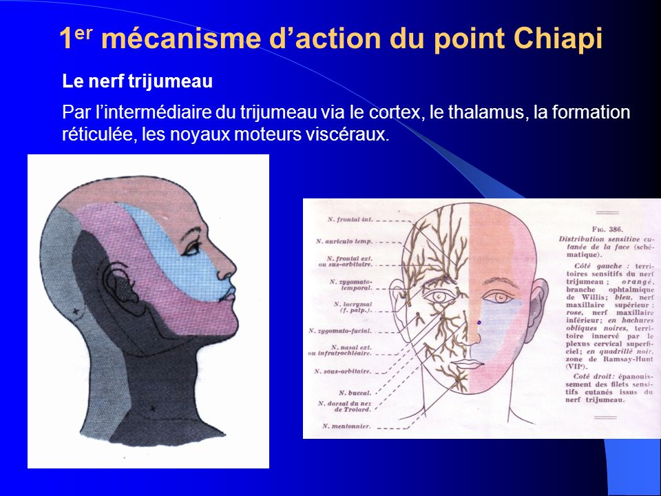 1er mécanisme d'action du point Chiapi