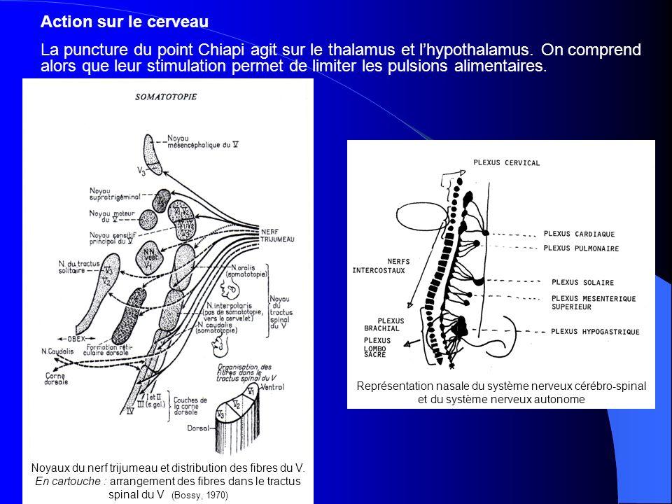Noyaux du nerf trijumeau et distribution des fibres du V.