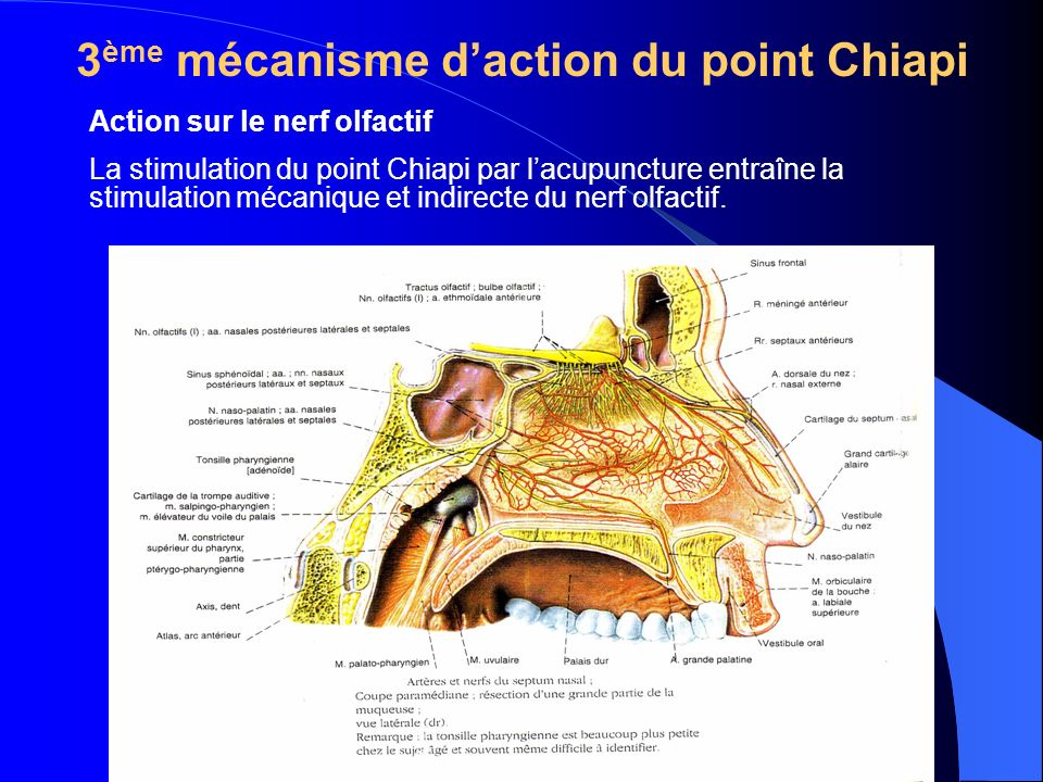 3ème mécanisme d'action du point Chiapi