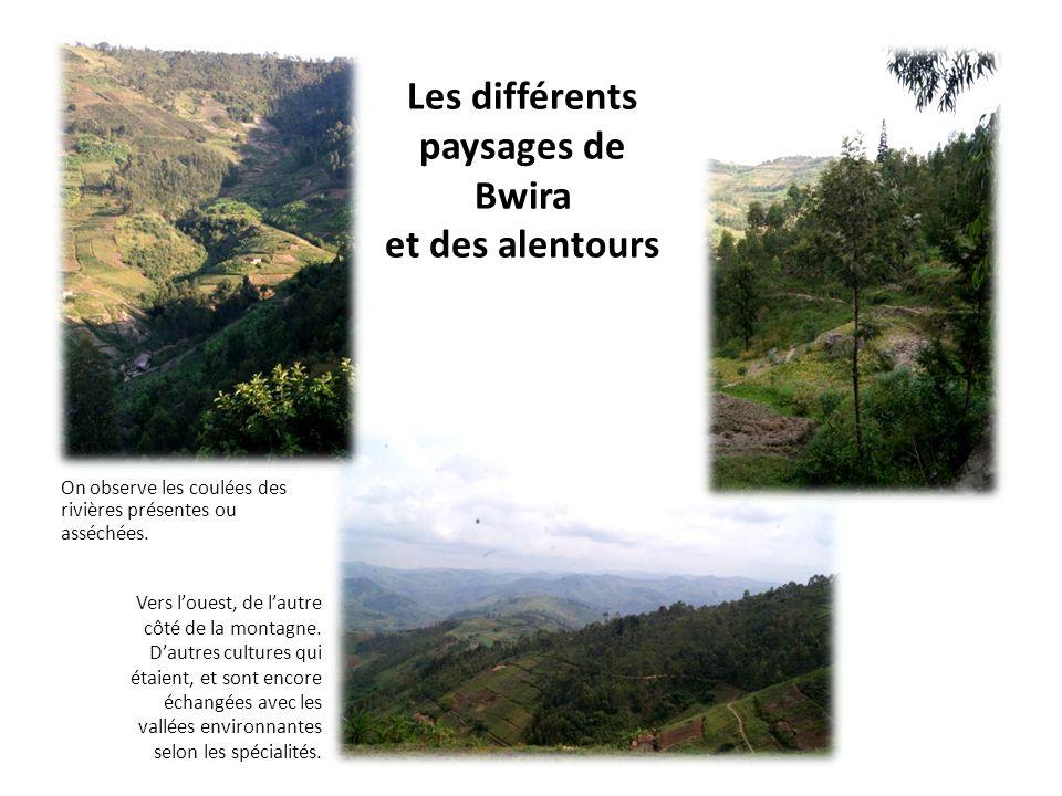 Les différents paysages de Bwira et des alentours