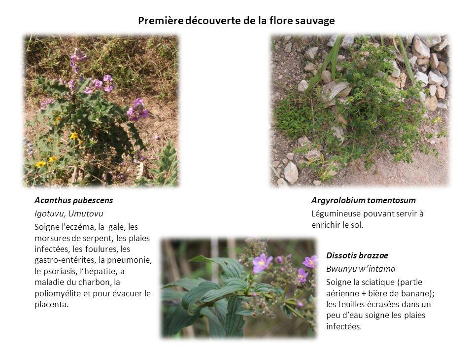 Première découverte de la flore sauvage