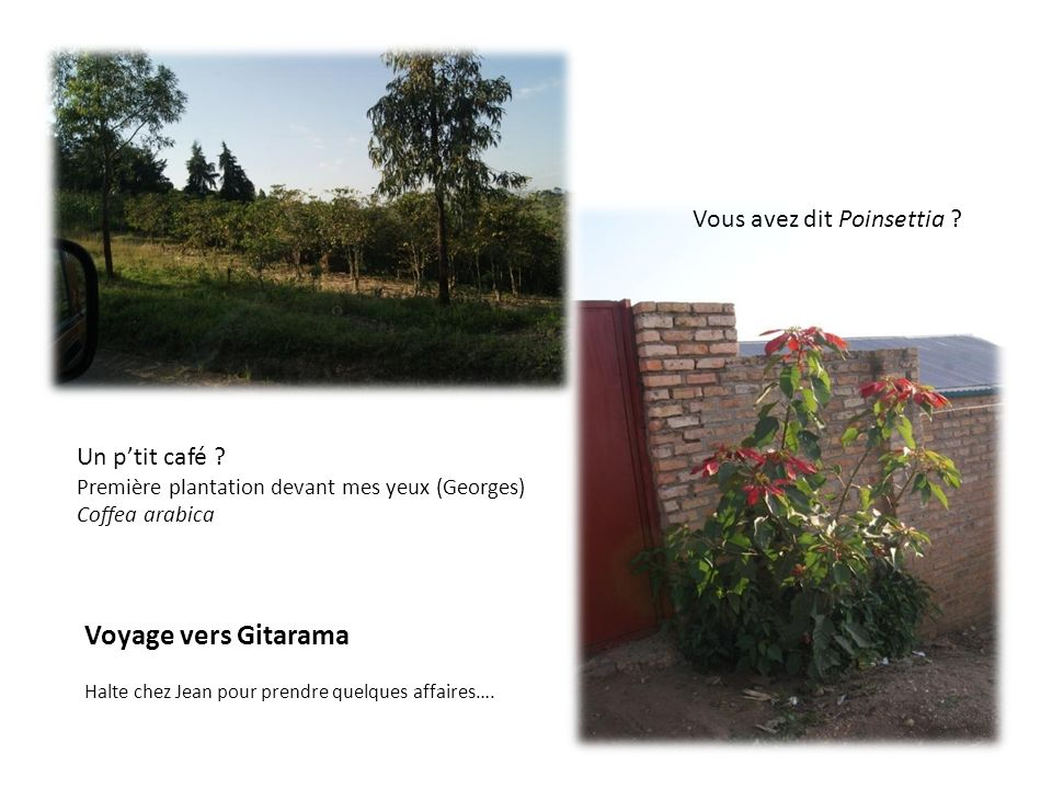 Voyage vers Gitarama Vous avez dit Poinsettia Un p'tit café