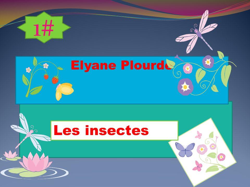 1# Elyane Plourde Les insectes