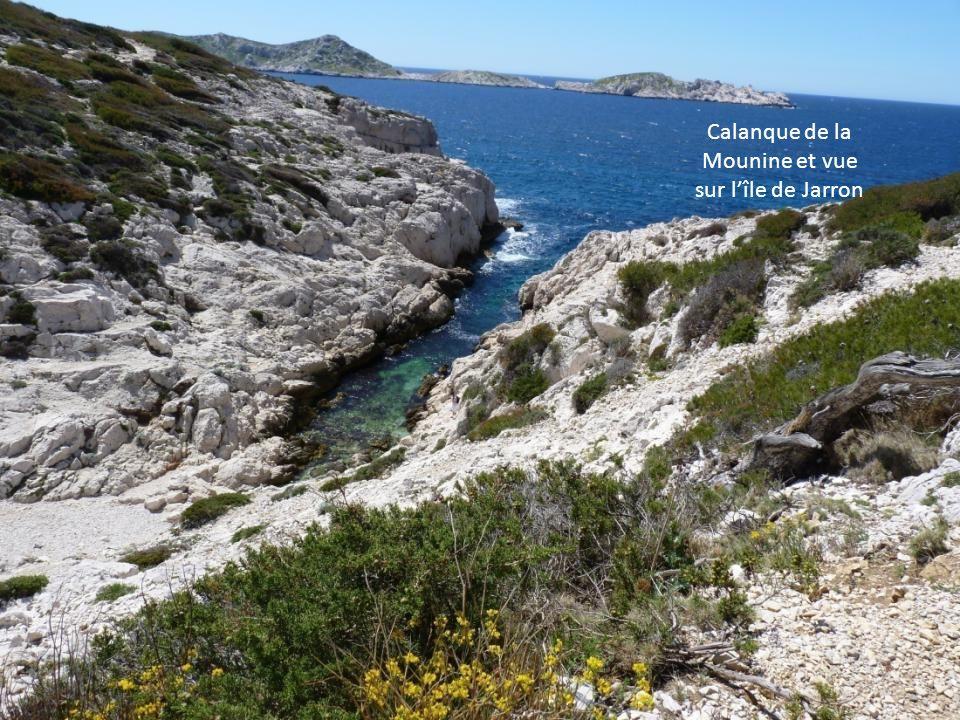Calanque de la Mounine et vue sur l'île de Jarron