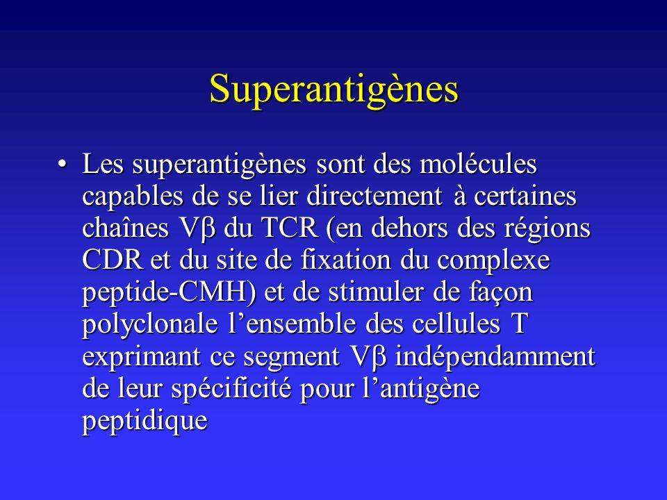 Superantigènes