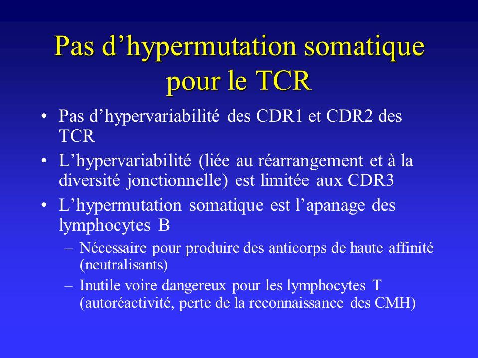 Pas d'hypermutation somatique pour le TCR