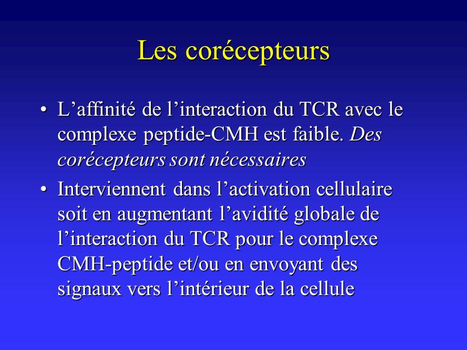 Les corécepteurs L'affinité de l'interaction du TCR avec le complexe peptide-CMH est faible. Des corécepteurs sont nécessaires.