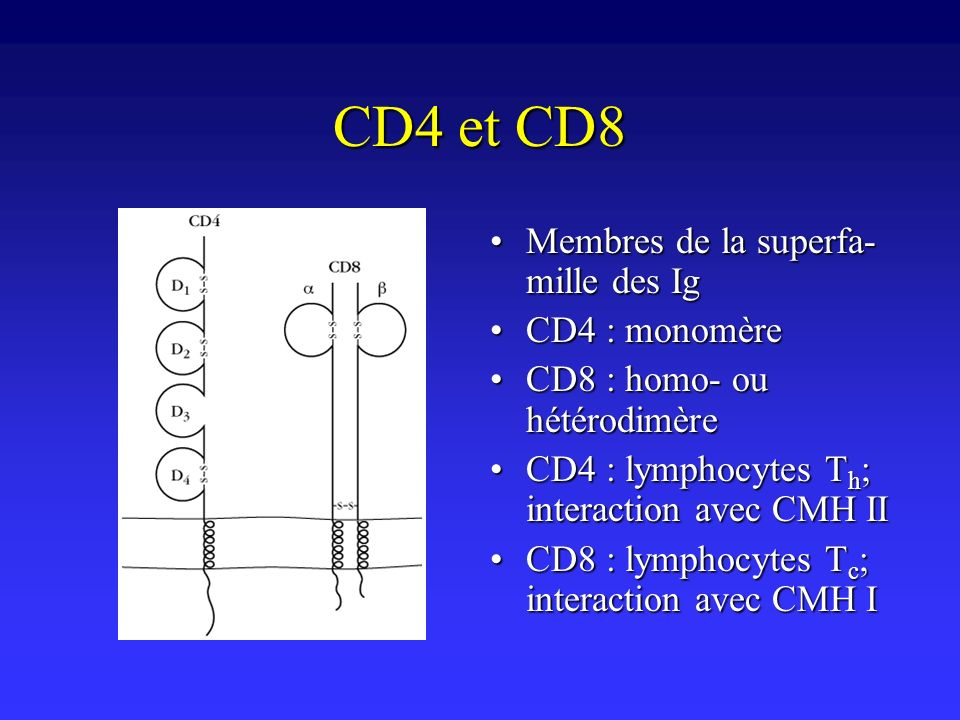 CD4 et CD8 Membres de la superfa-mille des Ig CD4 : monomère