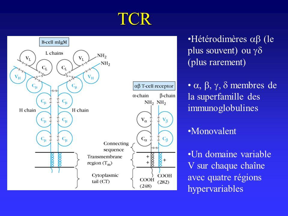 TCR Hétérodimères ab (le plus souvent) ou gd (plus rarement)