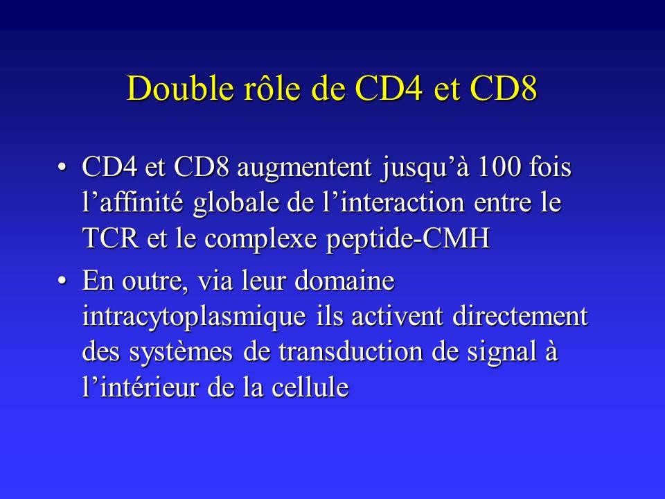 Double rôle de CD4 et CD8 CD4 et CD8 augmentent jusqu'à 100 fois l'affinité globale de l'interaction entre le TCR et le complexe peptide-CMH.
