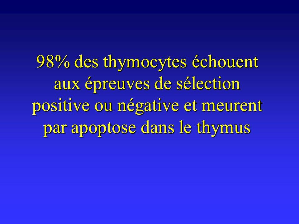98% des thymocytes échouent aux épreuves de sélection positive ou négative et meurent par apoptose dans le thymus