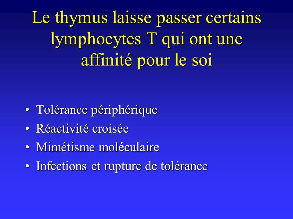 Le thymus laisse passer certains lymphocytes T qui ont une affinité pour le soi
