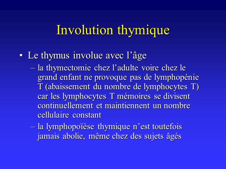 Involution thymique Le thymus involue avec l'âge
