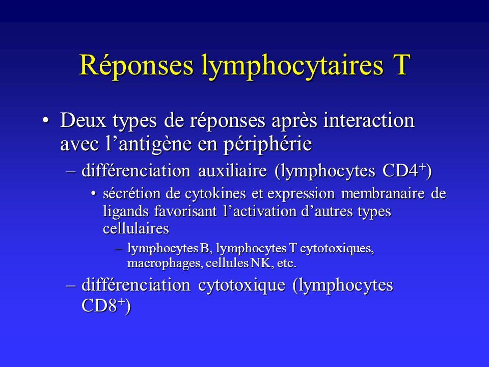 Réponses lymphocytaires T