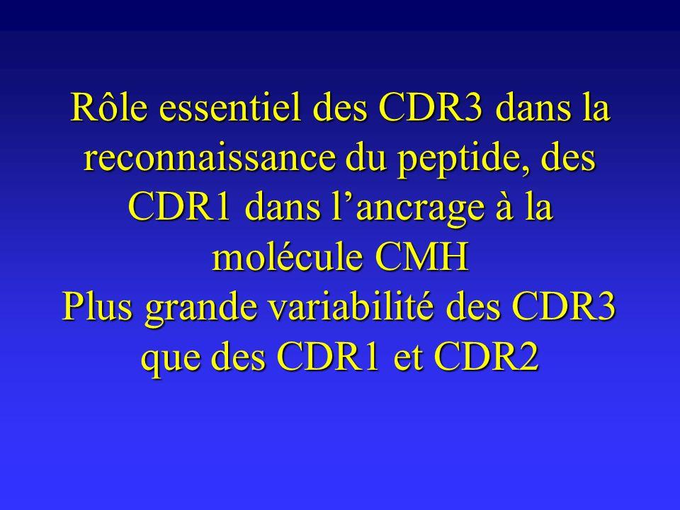 Rôle essentiel des CDR3 dans la reconnaissance du peptide, des CDR1 dans l'ancrage à la molécule CMH Plus grande variabilité des CDR3 que des CDR1 et CDR2