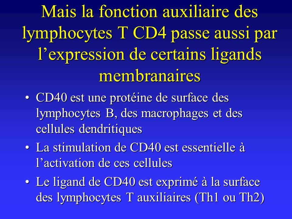 Mais la fonction auxiliaire des lymphocytes T CD4 passe aussi par l'expression de certains ligands membranaires