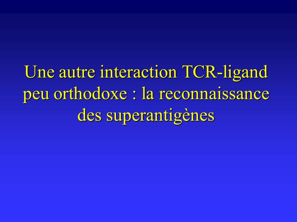 Une autre interaction TCR-ligand peu orthodoxe : la reconnaissance des superantigènes