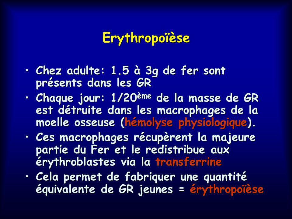 Erythropoïèse Chez adulte: 1.5 à 3g de fer sont présents dans les GR