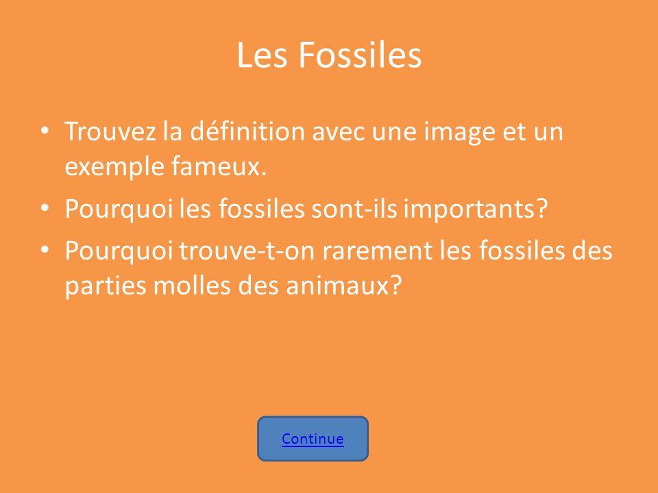 Les Fossiles Trouvez la définition avec une image et un exemple fameux. Pourquoi les fossiles sont-ils importants