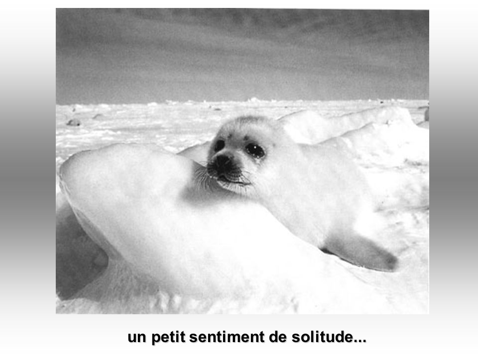 un petit sentiment de solitude...