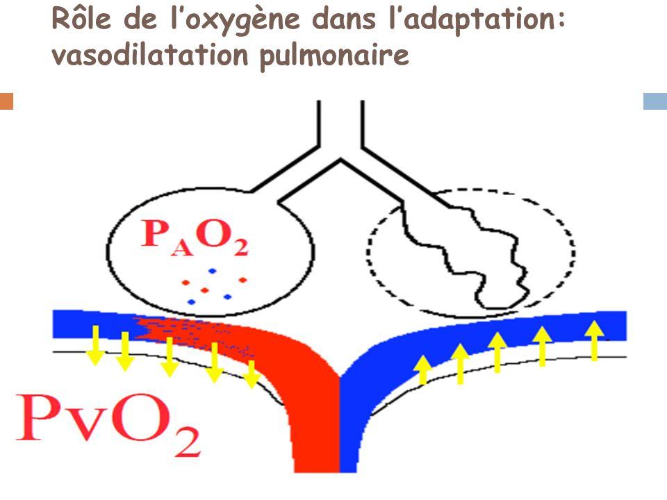 Rôle de l'oxygène dans l'adaptation: vasodilatation pulmonaire
