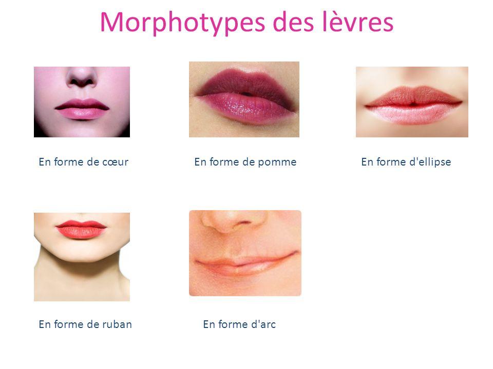 Morphotypes des lèvres