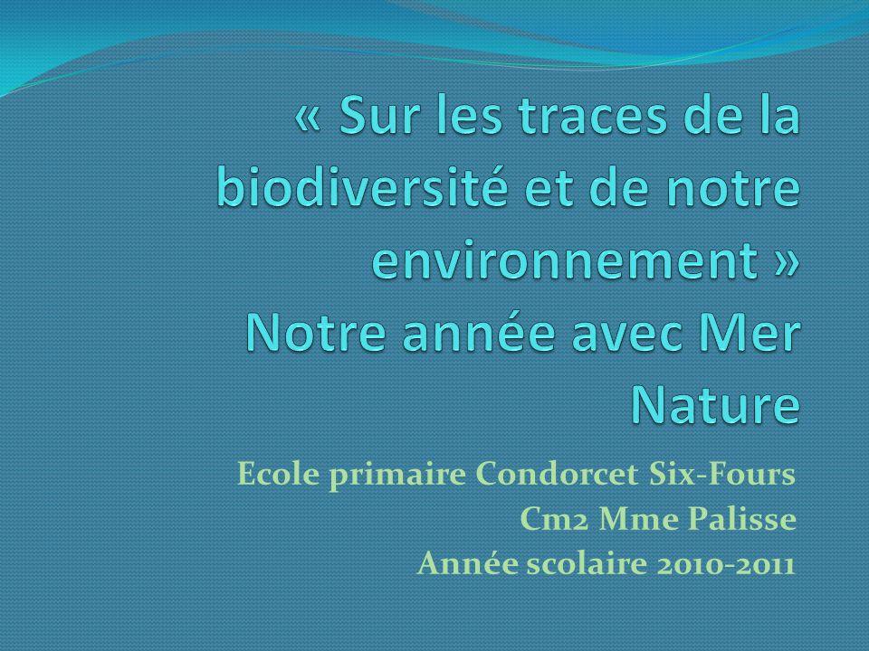 « Sur les traces de la biodiversité et de notre environnement » Notre année avec Mer Nature