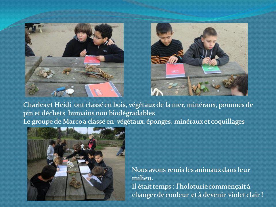 Charles et Heidi ont classé en bois, végétaux de la mer, minéraux, pommes de pin et déchets humains non biodégradables