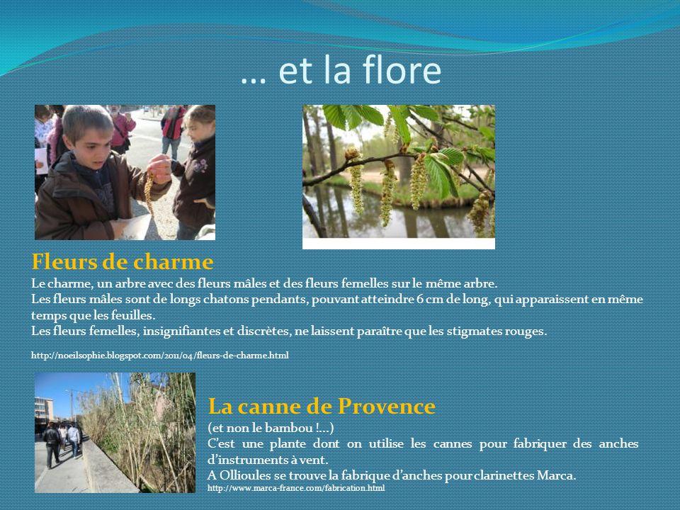 … et la flore Fleurs de charme La canne de Provence