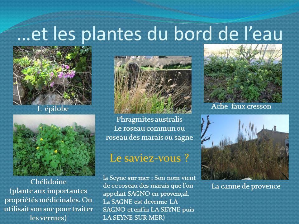 …et les plantes du bord de l'eau